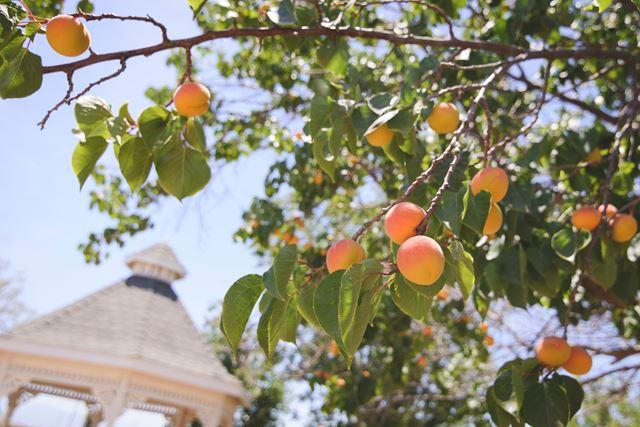夏バテスタミナ桃ウナギ