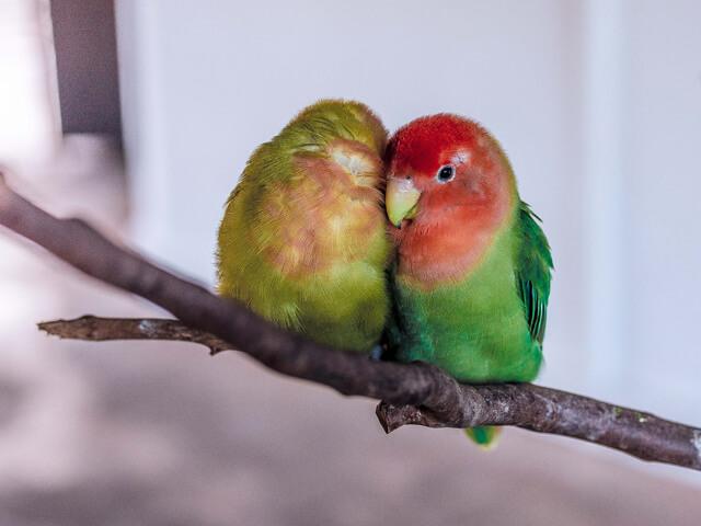 マンネリ夫婦対策1:信頼関係を育てる