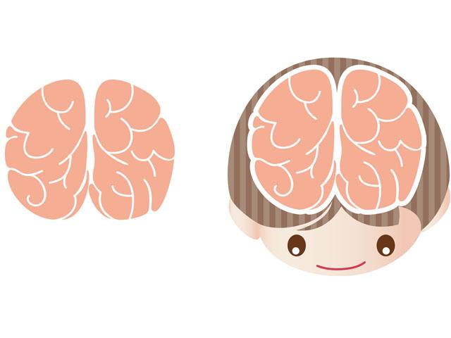 6歳までが勝負!?基本脳と新しい脳