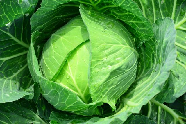 ダイエットに取り入れたいおススメの野菜5選