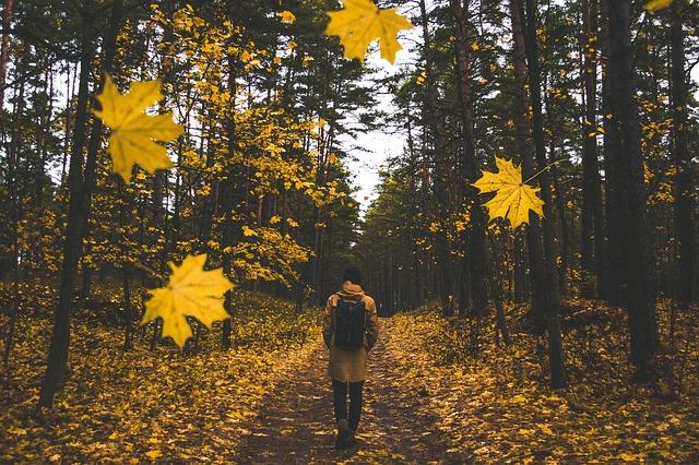 2018年秋の吉方位~自分の誕生年から見つける&吉方位旅行<九星気学>