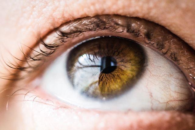 男の子女の子違い目の構造