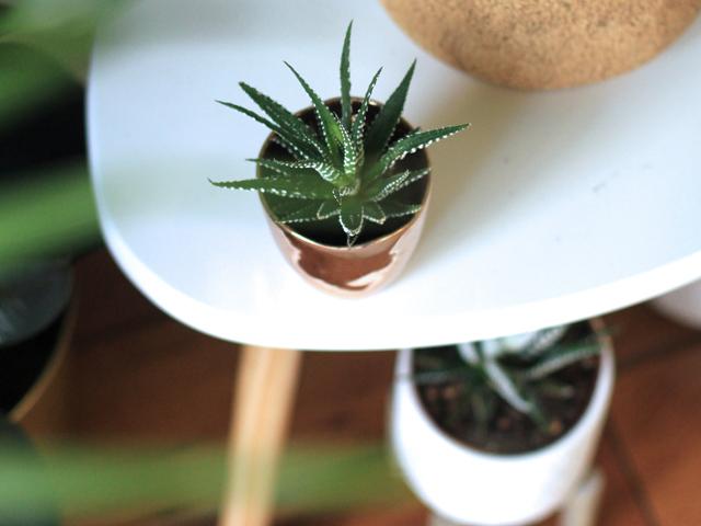 夫婦円満風水ポイントリビング陶器グリーン