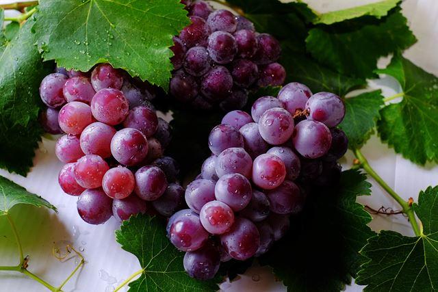 ブドウぶどう葡萄フルーツダイエット