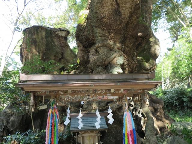 来宮神社(きのみやじんじゃ)【静岡】