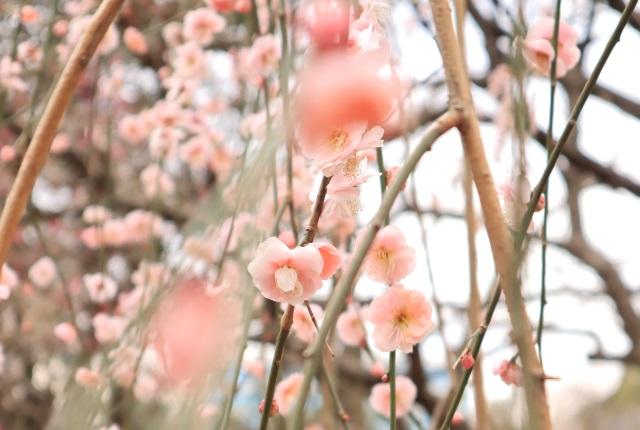 2019年3月~5月春開運日