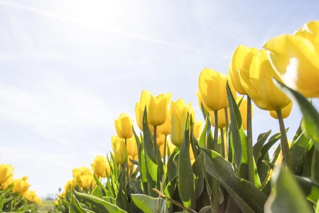 2019年3月~5月春一粒万倍日天赦日