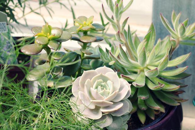 風水運気アップ観葉植物の置き場所玄関