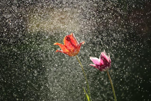 風水梅雨運気を下げない日常の過ごし方