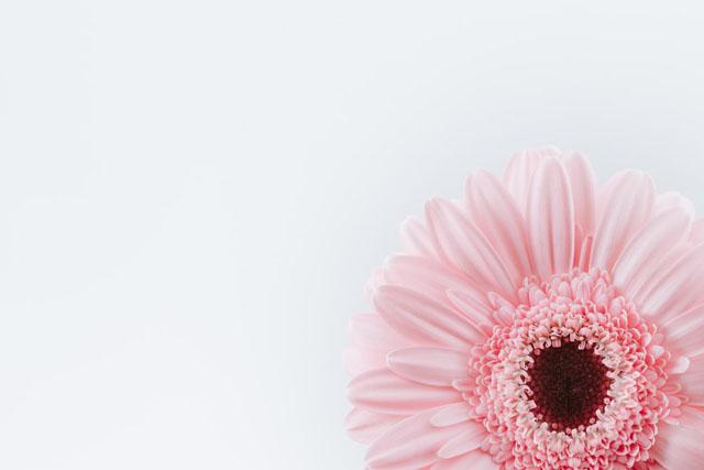 結婚運アップ風水リビング居間ピンク色ガーベラ