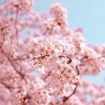 簡単風水開運アクション春分の日