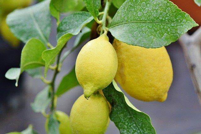 風水金運アップ香りレモン柑橘系