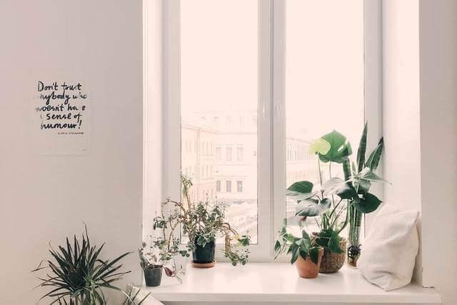夏不調風水で解決オススメ開運方法観葉植物を育てる