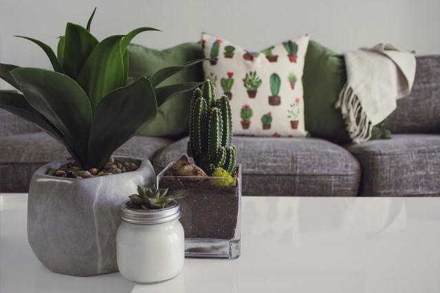観葉植物は運の良い環境づくりに欠かせないアイテム