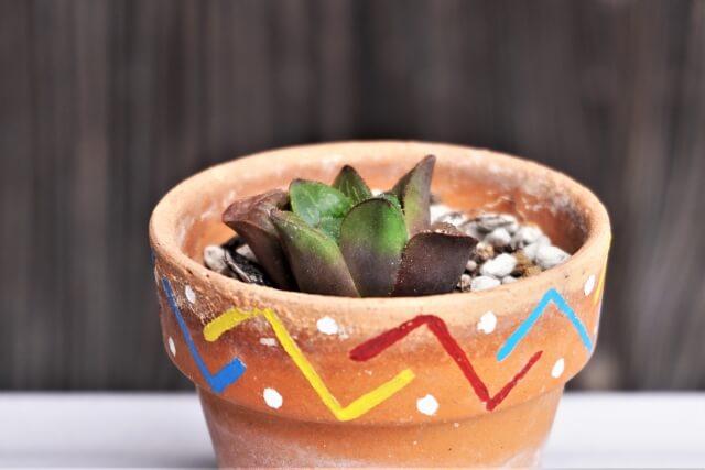 多肉植物を植える花器選びのポイント注意点