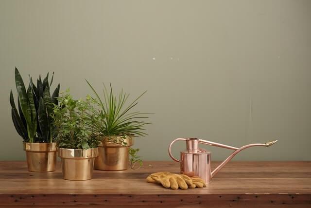 仕事運アップおすすめ観葉植物5種